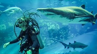 SHARK AQUARIUM SCUBA DIVE!(DAY 757 // 21ST MARCH 2015 DOWNLOAD MY APP STORIE http://bit.ly/storie1 Follow… Nick https://www.youtube.com/user/nickmillerza Ange ..., 2015-03-24T22:30:00.000Z)