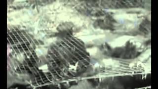 2 Военная хроника 1941-1945