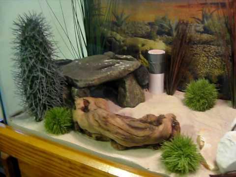 leopard gecko desert terrarium youtube. Black Bedroom Furniture Sets. Home Design Ideas