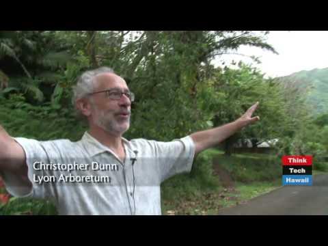 Preserving Hawaii's Endangered Plants at Lyon Arboretum