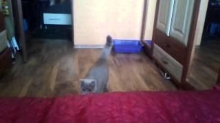 Кошка сима прикол.mp4