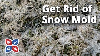 Do My Own Lawn Care - How to Get Rid of Snow Mold