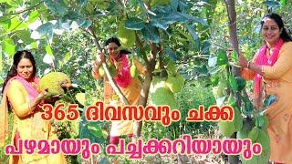 പ്ലാവിൽ ചക്ക എപ്പോഴും ഉണ്ടാകാൻ അറിയേണ്ടത് Jackfruit Cultivation Kerala Agriculture