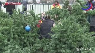 На центральной площади Махачкалы идет подготовка к новогодним праздникам