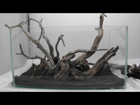Perfect Aquascape Using Manzy Wood And Dragon Rock   YouTube