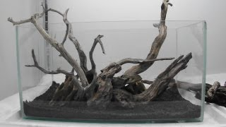 Aquascape Using Manzy Wood And Dragon Rock
