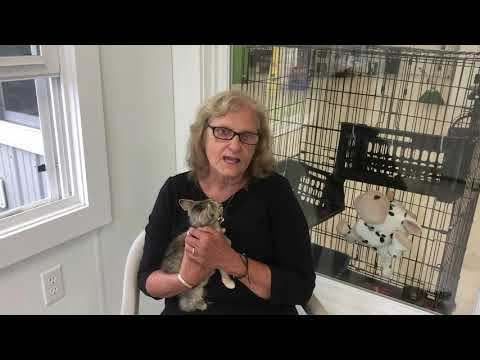 Animal Care Sanctuary | Animal Care Sanctuary     Take Me Home