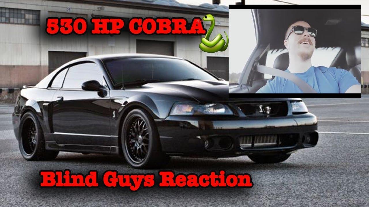 Terminator Cobra Max Hp
