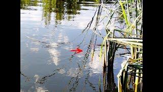 Рыбалка на поплавок Летом ловля карася и плотвы Рыбалка 2018
