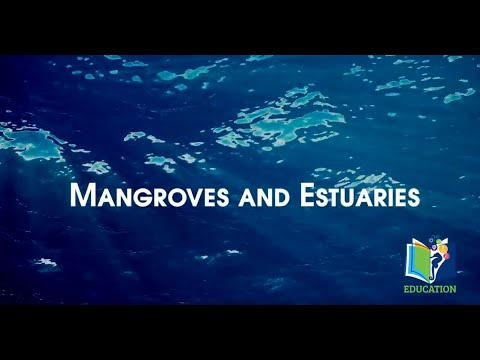 Deep Sea Learning: Mangroves & Estuaries
