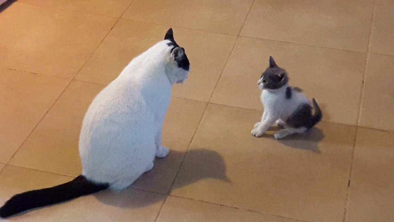 Resultado de imagen para gatos grandes y chiquitos
