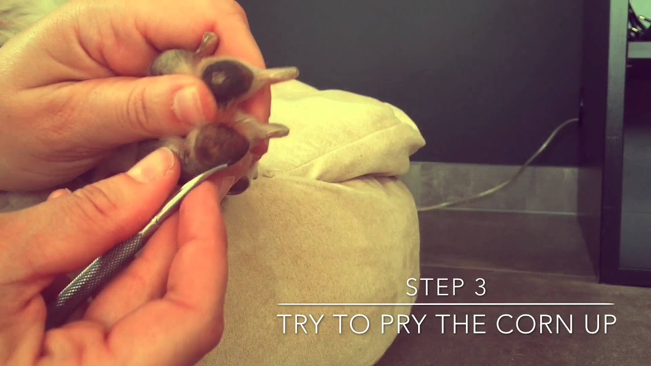 How To Remove A Corn On A Dogs Paw