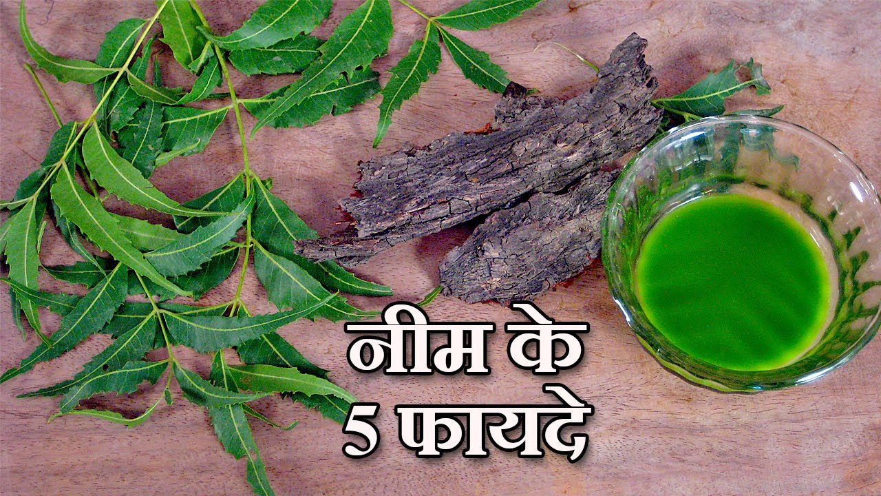 neem benefits in hindi by sonia goyal 5 neem benefits in hindi 234423682350 23252375 235423662349 by sonia goyal jaipurthepinkcity com