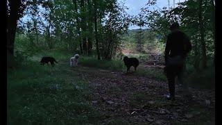 Educa Patte - Marche cani nocturne du 23 juillet 2021
