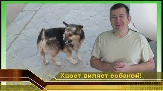 Хвост виляет собакой! Смешные и прикольные животные. Мир и Жизнь собак. Отдых в Краснодаре