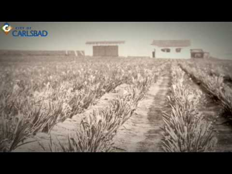 Flower Fields History