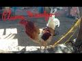 Video de Pluma Hidalgo