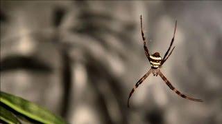 NY natural history museum debunk spider phobia