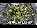 Cara Membuat Pencok Kacang Panjang Khas Sunda ala Masakan Rumahan
