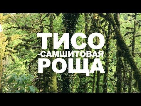 Вопрос: Реликтовый лес, это что Как выглядит?