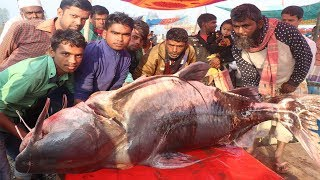 400 Years Old Biggest Fish Fair Traditional Poradaho Macher Mela In Bogra Deshi Food Channel 🐟 2019