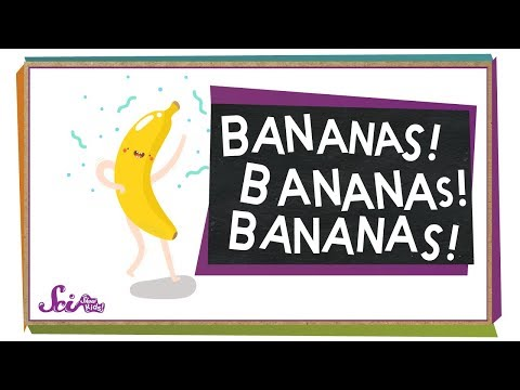 Where Do Bananas Come From? | Botany for Kids