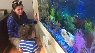 4K+aquarium+video+desktop+wallpaper 4k Aquarium Video As Desktop Wallpaper