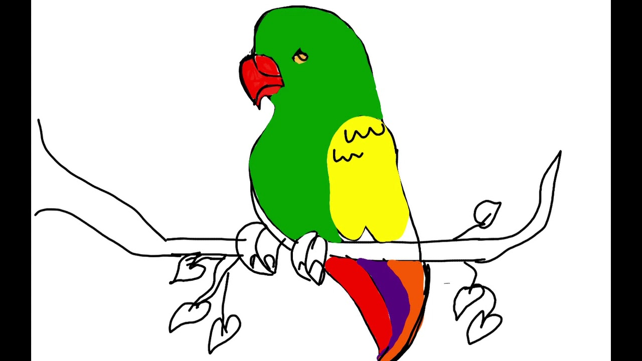 LEARN To DRAW AND COLOUR A PARROT WITH ME