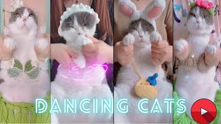 Dancing cats(belly dancing)  to music enjoy the moment/cute and funny dance