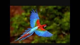 Картинки с попугаями