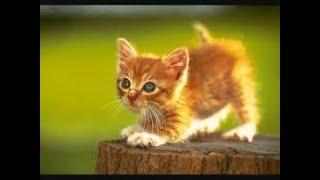 Vidéo, ha les petits chats trop drôle a partagé sur vos téléphone-appareil photo gratuit