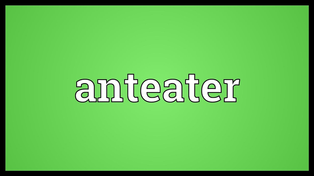 Anteater Meaning - YouTube