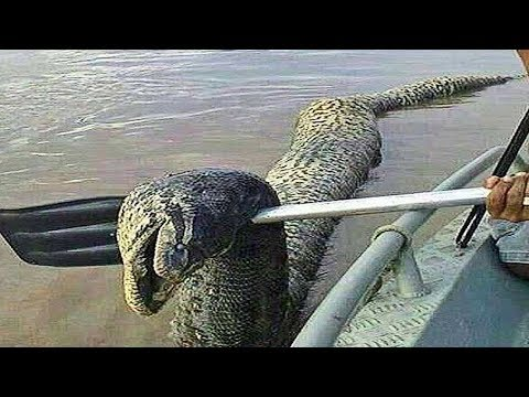 15 River Monsters Caught in the Amazon!