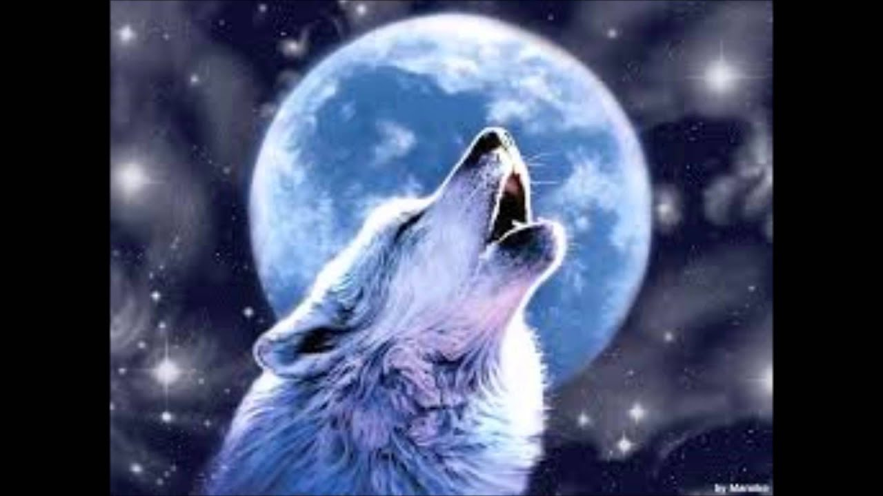 Free Animated Desktop Wallpaper For Windows 8 Battle Cry Skillet Wolf Pics Youtube