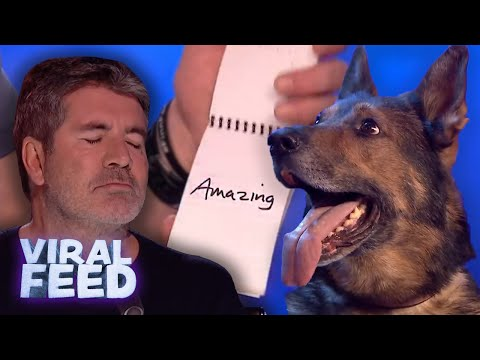 MIND READING DOG SAVES OWNER'S LIFE | VIRAL FEED