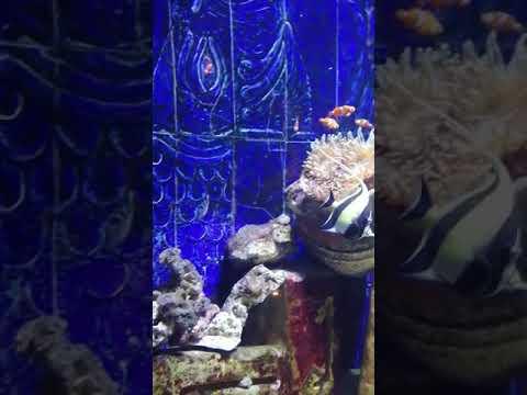 Lost Chambers, Atlantis Dubai