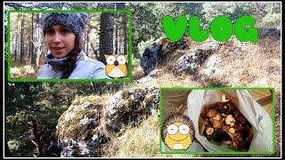 VLOG: по грибы/ красоты Урала/ вкусный салат