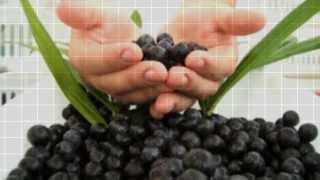 Acai Berry Select - The truth about acai berry(http://acaiberryselect-reviews.net/ LOOK and FEEL BETTER with Acai Berry Select Lose Weight and Get Ripped! Studies have shown that this little berry is one ..., 2013-09-20T14:10:40.000Z)