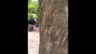 Cigale au Camping les Cigales à Cassis
