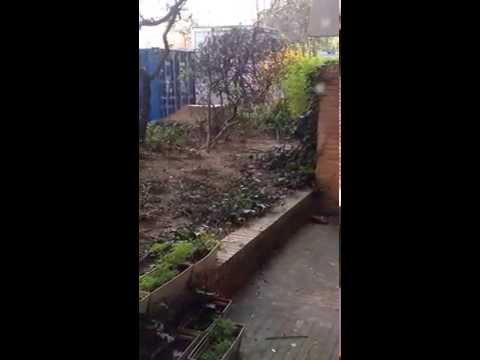 Des rats dans les jardins de Boulogne