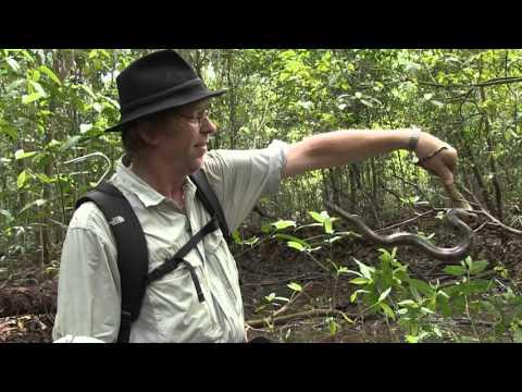 Junglecamp teazer