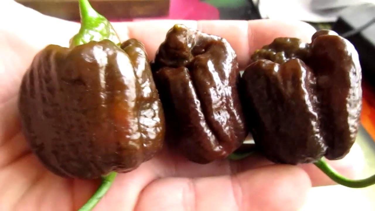 Острые копчёные перцы перец чипотле chipotle купить киев. Yellow moruga scorpion chilli перец экстремальной. Коренной житель островов карибского бассейна -тринидада и тобаго. Родина перца район moruga. Внесён в.