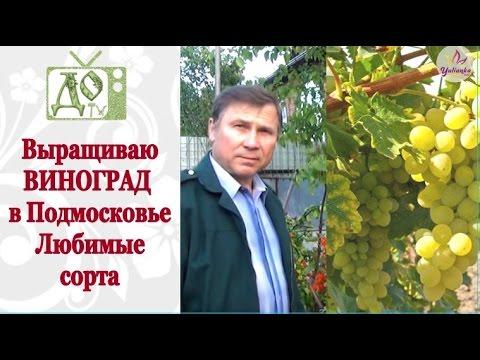 Как пасынковать виноград -