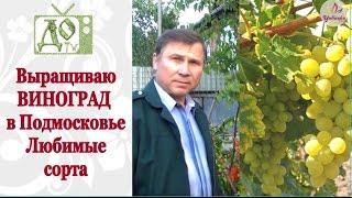 Выращиваю ВИНОГРАД в Подмосковье. Как сформировать лозу(Выращивание винограда в условиях Подмосковья.Формирование куста от одного года то пяти лет. Обрезка лозы...., 2016-05-25T19:27:32.000Z)