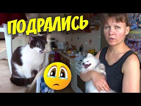 Вопрос: Кошка нападает на щенка, как воспитывать?