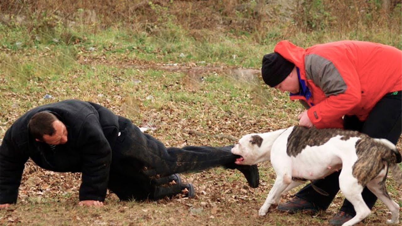 Мужчина подкормил дикого пса, не зная, что в следующий миг он станет его спасителем