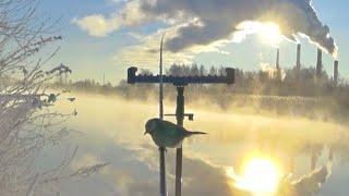 Стрим Первая Весенняя рыбалка на фидер и поплавок