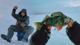 Вечерние кабанчики загибают удочку Рыбалка 2020 Ловля крупного окуня на балансир
