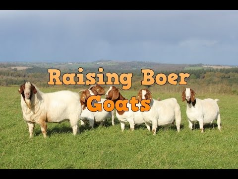 Is raising boer goats profitable