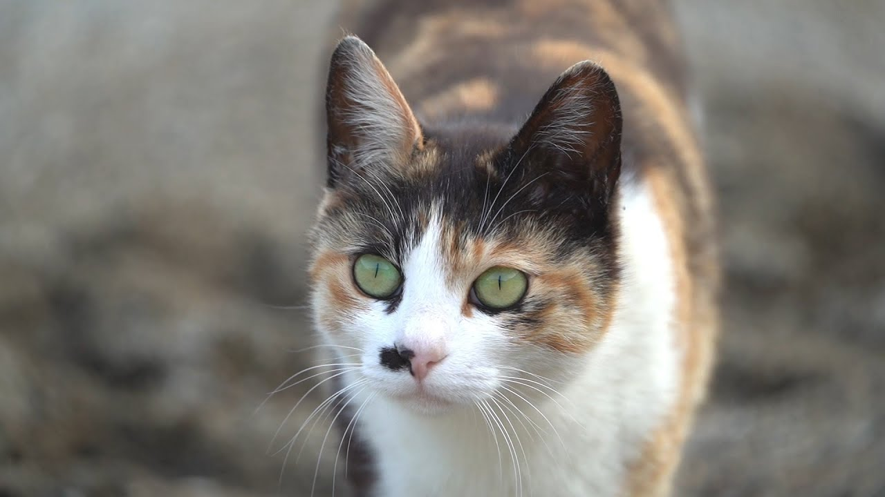 고양이 지능 테스트라는 걸 해보았다